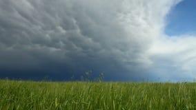 Συγκομιδή σιταριού με το πλησιάζοντας σύννεφο θύελλας απόθεμα βίντεο