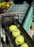 Συγκομιδή της Apple Στοκ φωτογραφία με δικαίωμα ελεύθερης χρήσης