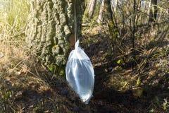 Συγκομιδή του σφρίγους σημύδων Στοκ εικόνα με δικαίωμα ελεύθερης χρήσης