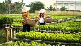 Συγκομιδή των λουλουδιών στο χωριό λουλουδιών Sadec, Βιετνάμ στοκ φωτογραφία