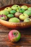 Συγκομιδή φθινοπώρου των μήλων Στοκ Εικόνα