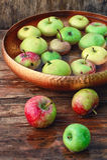Συγκομιδή φθινοπώρου των μήλων Στοκ φωτογραφίες με δικαίωμα ελεύθερης χρήσης