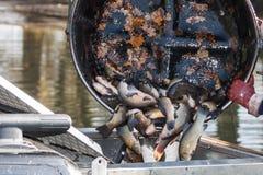 Συγκομιδή φθινοπώρου tench Στοκ εικόνες με δικαίωμα ελεύθερης χρήσης