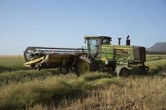 Συγκομιδή Canola σε ένα νοτιοαφρικανικό αγρόκτημα Στοκ εικόνα με δικαίωμα ελεύθερης χρήσης