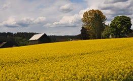 Συγκομιδή Ragweed στην κοιλάδα Tualatin Στοκ φωτογραφία με δικαίωμα ελεύθερης χρήσης