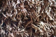Συγκομιδή Tabacco Στοκ Εικόνα