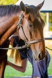Συγκρατημένο άλογο στοκ φωτογραφία με δικαίωμα ελεύθερης χρήσης