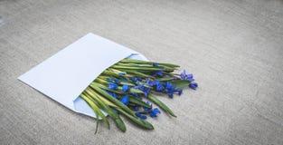 Συγχαρητήρια επιστολή Άσπρος φάκελος και μπλε wildflowers Στοκ εικόνες με δικαίωμα ελεύθερης χρήσης