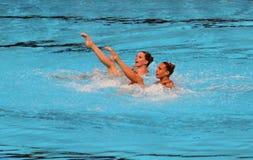 Συγχρονισμένη κολύμβηση Στοκ Εικόνα