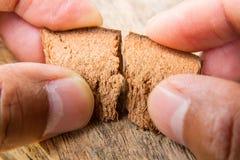 Συγχώνευση της μπριζόλας καρύδων στον ξύλινο πίνακα Στοκ εικόνες με δικαίωμα ελεύθερης χρήσης