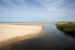Συκώτι ποταμών Στοκ φωτογραφίες με δικαίωμα ελεύθερης χρήσης
