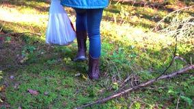 Συλλεκτικές μηχανές μανιταριών στο δάσος φθινοπώρου που ψάχνει τα μανιτάρια στον ήλιο πρωινού απόθεμα βίντεο