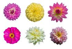 Συλλογής λουλούδια χρώματος που απομονώνονται πολυ στο λευκό Στοκ εικόνα με δικαίωμα ελεύθερης χρήσης