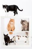 Συλλογή γατών Στοκ φωτογραφίες με δικαίωμα ελεύθερης χρήσης