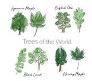 Συλλογή δέντρων και φύλλων Watercolor συρμένο χέρι σκίτσο δασικών δέντρων και φύλλων διανυσματική απεικόνιση
