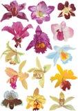συλλογή δεκατέσσερα orchids ελεύθερη απεικόνιση δικαιώματος