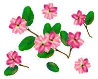 Συλλογή λουλουδιών brunch Ζωηρόχρωμες ορχιδέες με τα πράσινα φύλλα Διανυσματικό σύνολο σχεδίου απεικόνισης Ροζ και πράσινος απεικόνιση αποθεμάτων