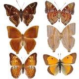 συλλογή πεταλούδων που χρωματίζεται Στοκ Φωτογραφίες