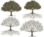 Συλλογή σκιαγραφιών δέντρων & ριζών δέντρων Στοκ Εικόνα