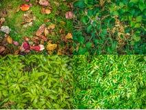 Συλλογή της πράσινης σύστασης φύλλων στοκ φωτογραφία με δικαίωμα ελεύθερης χρήσης
