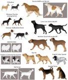 Συλλογή των διαφορετικών φυλών των σκυλιών Διανυσματική απεικόνιση