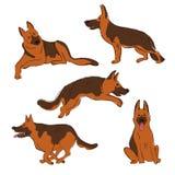 Συλλογή των εικονιδίων σκυλιών ποιμένων ελεύθερη απεικόνιση δικαιώματος