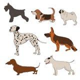 Συλλογή των εικονιδίων φυλών σκυλιών ελεύθερη απεικόνιση δικαιώματος