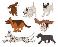 Συλλογή των εικονιδίων φυλών σκυλιών απεικόνιση αποθεμάτων
