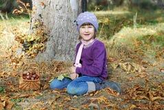 Συλλογή των κάστανων Στοκ εικόνα με δικαίωμα ελεύθερης χρήσης