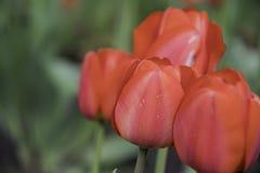 Συλλογή των κόκκινων λουλουδιών και του μουτζουρωμένου υποβάθρου Στοκ εικόνες με δικαίωμα ελεύθερης χρήσης