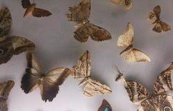 Συλλογή των πεταλούδων με το χτύπημα των μορφών στα φτερά τους Στοκ φωτογραφία με δικαίωμα ελεύθερης χρήσης