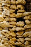 Συλλογή των σφουγγαριών θάλασσας που κρεμούν σε μια αγορά Στοκ Εικόνες