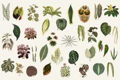 Συλλογή των φύλλων από τα νέα και σπάνια όμορφος-με φύλλα φυτά Ψηφιακά ενισχυμένος από την έκδοση του 1929 μας της δημοσίευσης ελεύθερη απεικόνιση δικαιώματος