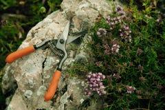Συλλογή των χορταριών βουνών για το τσάι στοκ φωτογραφία με δικαίωμα ελεύθερης χρήσης