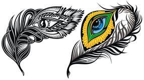 Συλλογή φτερών Peacock διανυσματική απεικόνιση