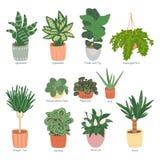 Συλλογή Houseplants που απομονώνεται στο άσπρο υπόβαθρο Εγχώριος κήπος Διανυσματική απεικόνιση του hand-drawn επιπέδου διανυσματική απεικόνιση