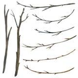 Συλλογή watercolor κλάδων δέντρων που απομονώνεται στο άσπρο υπόβαθρο στοκ εικόνες με δικαίωμα ελεύθερης χρήσης