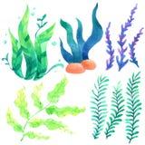 Συλλογή watercolor κοραλλιών που απομονώνεται υπόβαθρο, χέρι που σύρεται στο άσπρο που χρωματίζεται για τη ευχετήρια κάρτα, ταπετ διανυσματική απεικόνιση