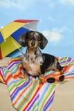 συμβαλλόμενο μέρος παραλιών dachshund Στοκ Φωτογραφίες