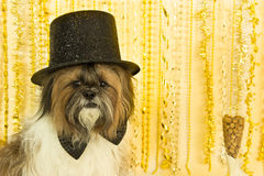 συμβαλλόμενο μέρος σκυλιών Στοκ φωτογραφία με δικαίωμα ελεύθερης χρήσης
