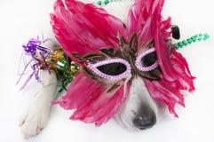 συμβαλλόμενο μέρος σκυ&l Στοκ εικόνες με δικαίωμα ελεύθερης χρήσης