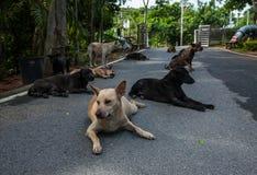 Συμμορία σκυλιών Στοκ εικόνες με δικαίωμα ελεύθερης χρήσης