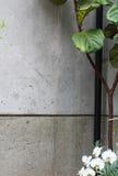 Συμπαγής τοίχος με τις εγκαταστάσεις και τις ορχιδέες Στοκ φωτογραφία με δικαίωμα ελεύθερης χρήσης