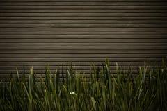 Συμπαγής τοίχος με τις εγκαταστάσεις Στοκ φωτογραφία με δικαίωμα ελεύθερης χρήσης