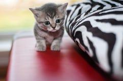 συμπαθητικός μικρός γατα& Στοκ φωτογραφία με δικαίωμα ελεύθερης χρήσης