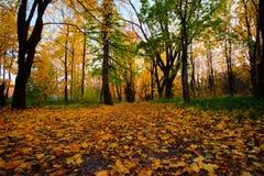 συμπαθητικό πάρκο φθινοπώ&rho Στοκ εικόνα με δικαίωμα ελεύθερης χρήσης