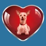 Συμπαθώ τα σκυλιά, είναι στην καρδιά μου! Στοκ Εικόνα