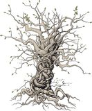 Συμπεπλεγμένο δέντρο Στοκ εικόνες με δικαίωμα ελεύθερης χρήσης