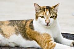 συμπεριφερθείτε γάτα κα Στοκ Φωτογραφίες
