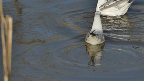Συμπεριφορά πουλιών απόθεμα βίντεο